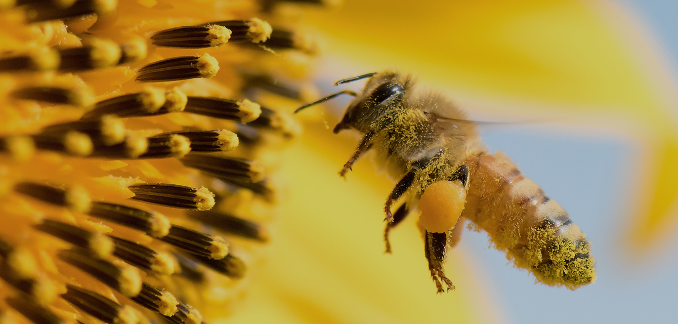 UV Absorber additives and pollinators